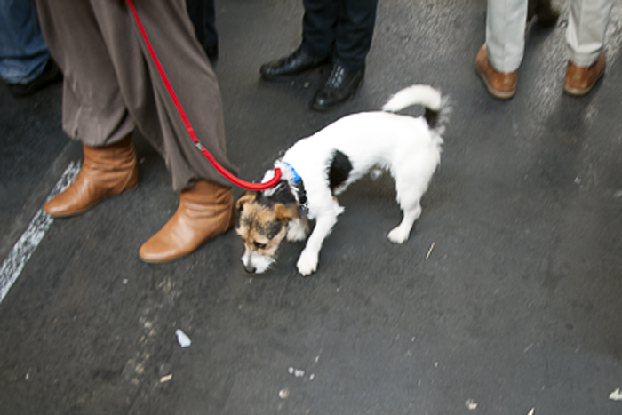 Jack Russell Terrier at Salone del Gusto