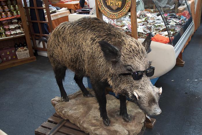 Wild Boar at Salone del Gusto
