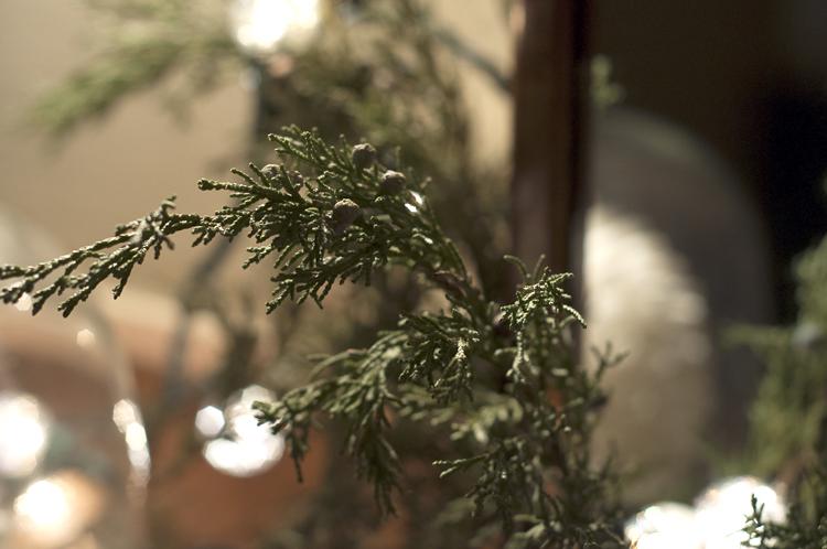 Juniper and Christmas Lights