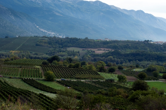 A tapestry of vineyards in Abruzzo