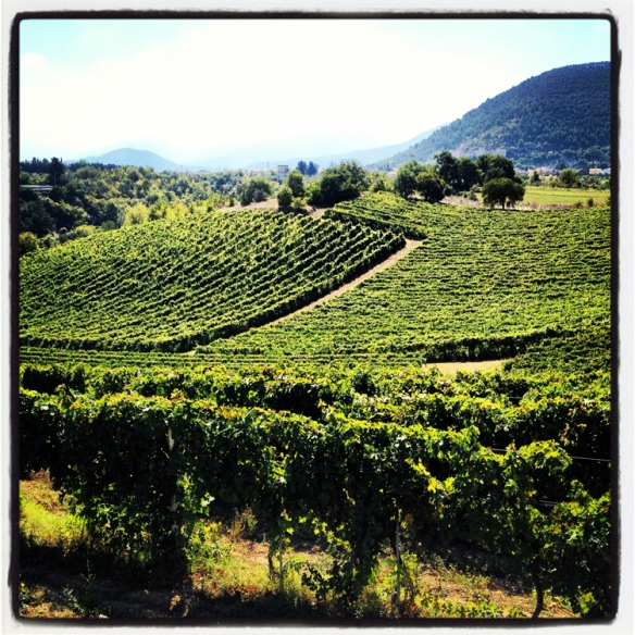 A glimpse of the vineyards on a spectacular day