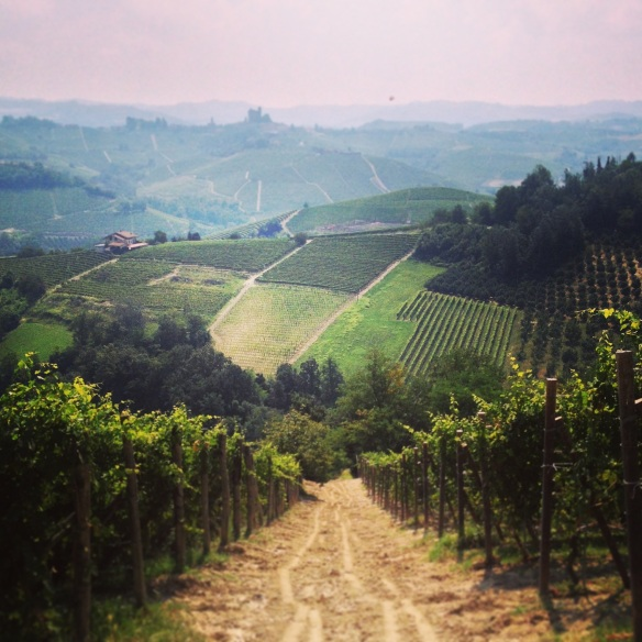Barolo country